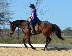 doc n horse